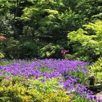 Notícias do Japão: Visitando o Museu de Arte Nezu