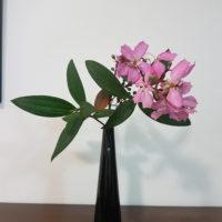 ブラジルの植物